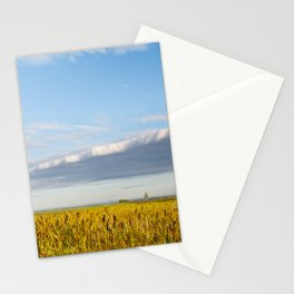 Morass grass in sun rising Stationery Cards
