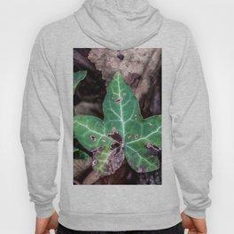 Ivy leaf Hoody