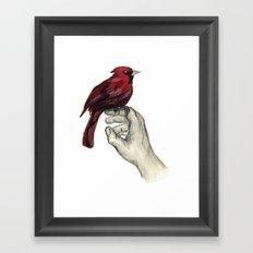 Cardinal Focus Framed Art Print