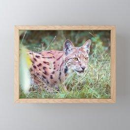 Lynx in the grass Framed Mini Art Print