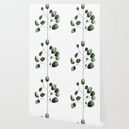 Eucalyptus Wallpaper