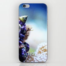 sea life iPhone & iPod Skin