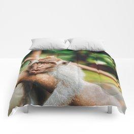 Cute Monkey (Color) Comforters