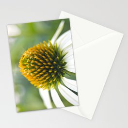Ecinacea Stationery Cards