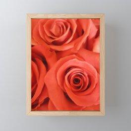 Pink Rose 10 Framed Mini Art Print