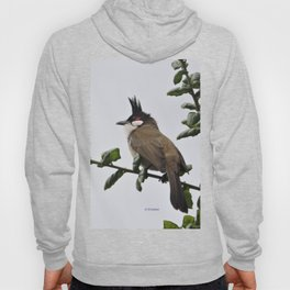 Red-Whiskered Bulbul Hoody
