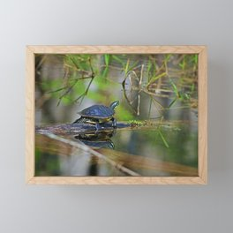 Baby Turtle Framed Mini Art Print