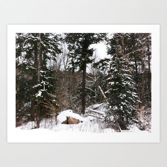 Somewhere in the Haliburton forest Art Print