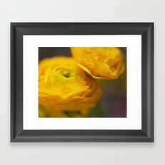 Soft Ranunculus Framed Art Print