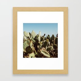 Canyon Cactus Framed Art Print