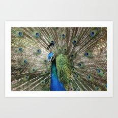 Peacock Indian Blue Art Print