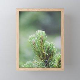 Evergreen Needles Framed Mini Art Print