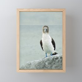 blue-footed booby Framed Mini Art Print