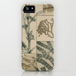 Patterns In Nature iPhone Case