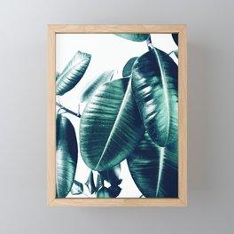 Ficus Elastica #1 Framed Mini Art Print