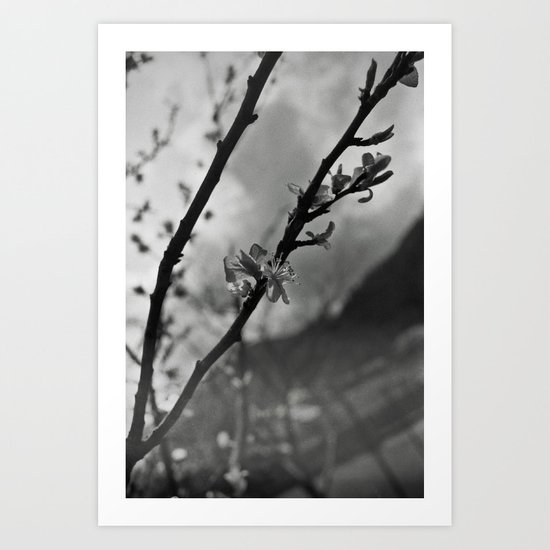 Faded spring Art Print
