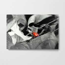 I was a chameleon in a past life Metal Print