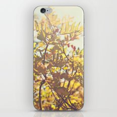 Fading Fall Leaves iPhone & iPod Skin