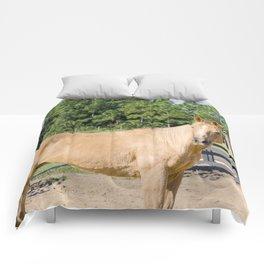 Amazing Champ Comforters