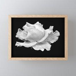 White Rose On Black Framed Mini Art Print