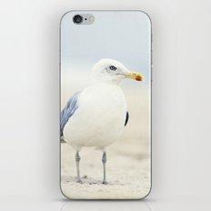 Seagull Beach Photography, Coastal Bird Jersey Shore Art iPhone & iPod Skin