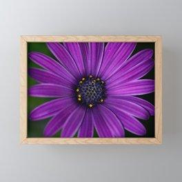 In your garden Framed Mini Art Print