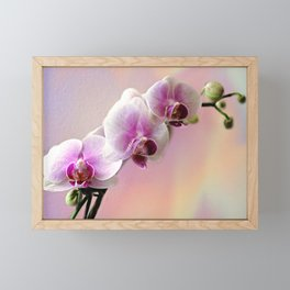 Pastel Rainbow Orchid Framed Mini Art Print