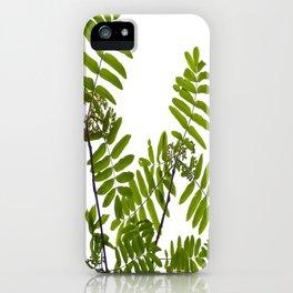 Green Rowan Leaves White Background #decor #society6 #buyart iPhone Case