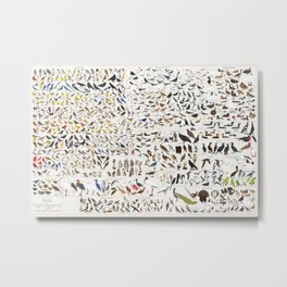 Every Bird Species in North America in a Single Poster new Metal Print