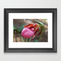The Pink Lady Slipper Framed Art Print