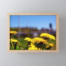 Concept flora . Dandelions in a field Framed Mini Art Print