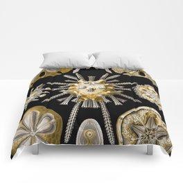 Ernst Haeckel Echinidea Sea Urchin Comforters