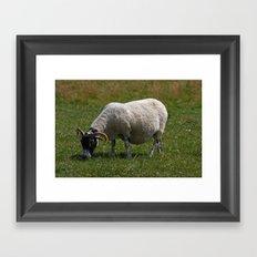 Sheep Baaaaa... Framed Art Print