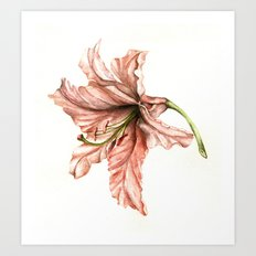 Pink Lily Flower Watercolor Art Print