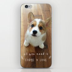 All you need is corgi and love iPhone & iPod Skin