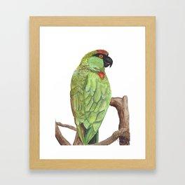 Cotorra Serrana Framed Art Print