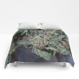 Master Kush Medical Marijuana Comforters