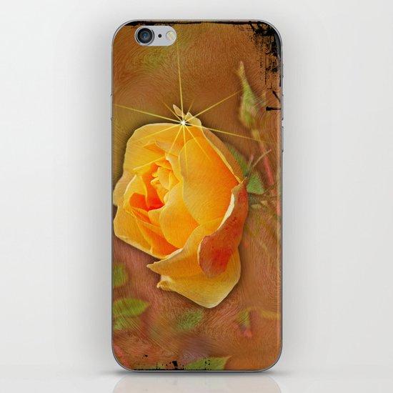 Peach rose iPhone & iPod Skin