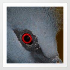 Victoria Crowned Pigeon Eye  Art Print