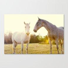 Two Horses Fine Art Photography Canvas Print