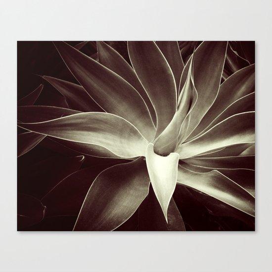 mocha java agave Canvas Print