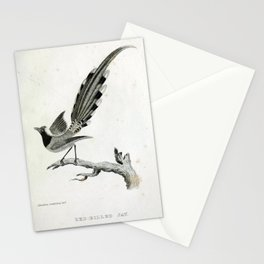 025 Red billed Jay pica erythrorynchos Stationery Cards