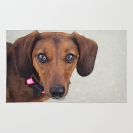 Doxie Dares You  Rug