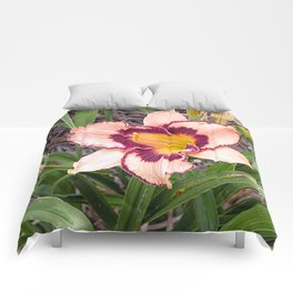Pink daylily growing in Queensland Comforters
