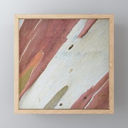 Eucalyptus tree bark Framed Mini Art Print