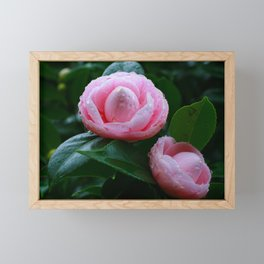 Camellias Framed Mini Art Print