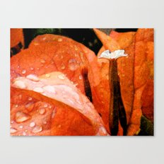 Tangerine Dreams Canvas Print
