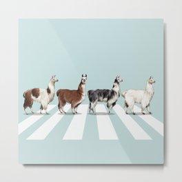 Llama The Abbey Road #1 Metal Print