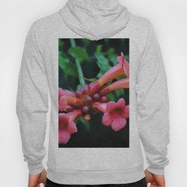 Coral Pink Trumpet Honeysuckle Hoody