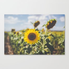 Allora | Sunflowers Canvas Print
